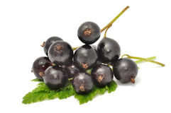 Black Currants. On a green leaf isolated on white Royalty Free Stock Photography