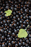 Black currants. Close up of black currants and green leaf royalty free stock photos