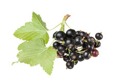 Black currants Stock Image