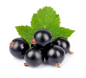 Black currants. Close up on white Stock Photos