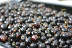 Black currants Stock Photo
