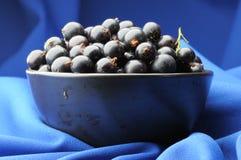 Black Currants. Stock Photo