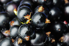 Black Currants. Royalty Free Stock Images