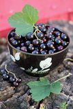 Black currants in the black bowl Stock Photography