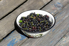 Black currants in a bowl on the bench. Royalty Free Stock Photo