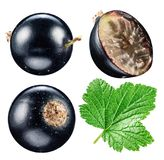 Black currants. File contains clipping paths. Royalty Free Stock Photos