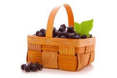 Black currants . Royalty Free Stock Photo