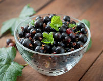 Black currants Royalty Free Stock Image