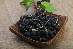 Black currants heap Stock Image