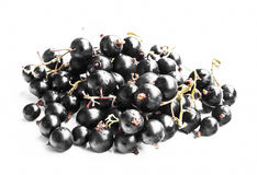 Black Currants Isolated Royalty Free Stock Photos