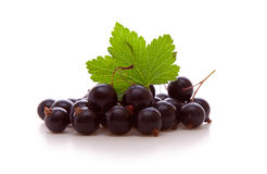 Black currants . Royalty Free Stock Photos