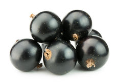 Black currants isolated on white Stock Images