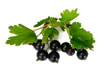 Black Currants Isolated on White Stock Photos