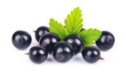Black currants. With leafs on white Royalty Free Stock Photos