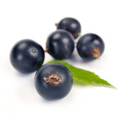 Black currants with leaves Stock Images