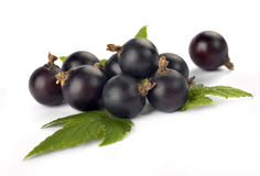Black currants with leaves Stock Photos