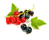Black currants with leaves Royalty Free Stock Images