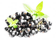 Black Currants with Mint Isolated Stock Image