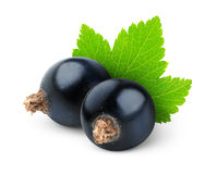 Black currants Stock Photography