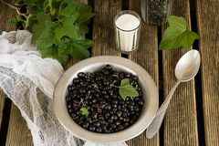Black currants in a plate with sugar and leaves. Currants in a plate with sugar and leaves stock photo