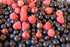 Black currants and raspberries background Royalty Free Stock Images