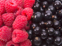 Black currants and raspberries background. Close-up Royalty Free Stock Image