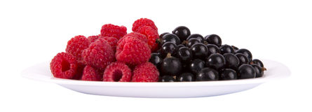 Black currants and raspberries. On white plate isolated on white background Royalty Free Stock Photos