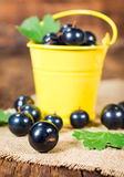 Black currants in a small bucket Royalty Free Stock Photography