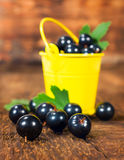 Black currants in a small bucket Stock Photos