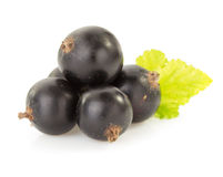 Black currants on white Stock Photo