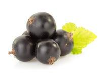Black currants on white Stock Photo