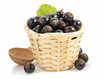 Black currants on white Stock Image