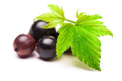 Black currants  on white Royalty Free Stock Photo