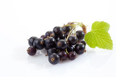 Black currants, white background Royalty Free Stock Photography