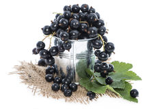 Black Currants on white Stock Images