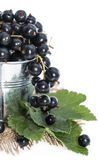 Black Currants on white Royalty Free Stock Photography