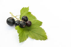 Black currants on white with leaf Stock Photos