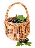 Black currants in a wicker basket Stock Images