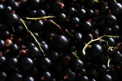 Berries of black current texture. Natural photo background. Royalty Free Stock Photography