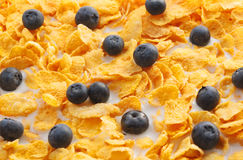 Black currents in cereal Stock Photography