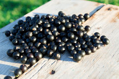 Black currents on wooden bench Royalty Free Stock Image