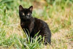 Black Cute Cat Kitten Pussycat Sit In Green Grass Outdoor At Summer Evening. Stock Photo