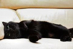 Black cute cat Royalty Free Stock Photos