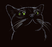 Black cute kitty on a black background. Royalty Free Stock Photography
