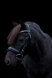 Black cute pony portrait on black background Royalty Free Stock Photo