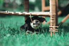 Black cute puppy stock photos
