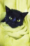 Black Cute soggy Cat after Bath. Black Cute Soggy Cat after a Bath, Drying off with a Towel. Bathing pets, Hygiene Royalty Free Stock Photos