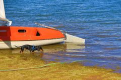 Boat dog lake shore. Black dachshund drinking water from a lake standing on the shore by a boat Stock Photography
