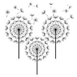 Black dandelions isolated on white background Royalty Free Stock Photo