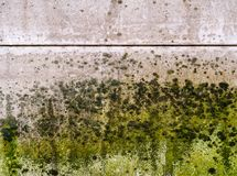 Mold thickly covers a wall. stock image